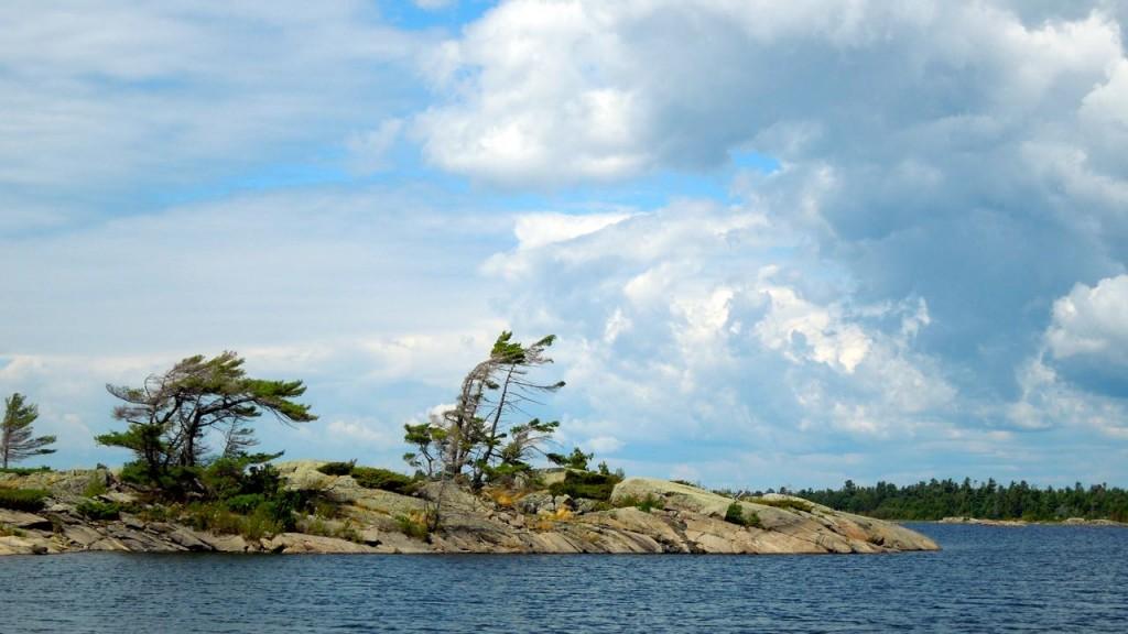 Georgian Bay Pines, August 2015
