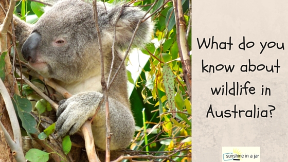 What do you know about wildlife in Australia?-2